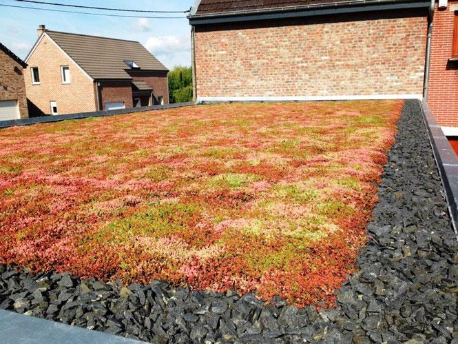 Zelená střecha Urbanscape